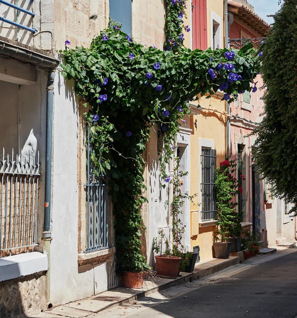 Arles - Arche Végétale
