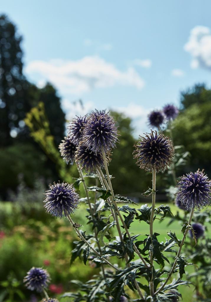 Botanic Garden Cambridge England