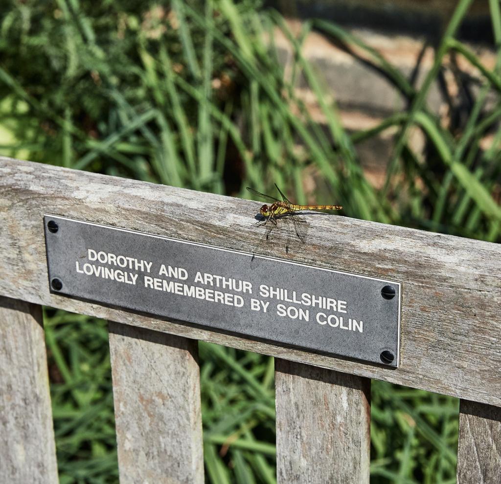 Dragonfly - Botanic Garden - Cambridge - England
